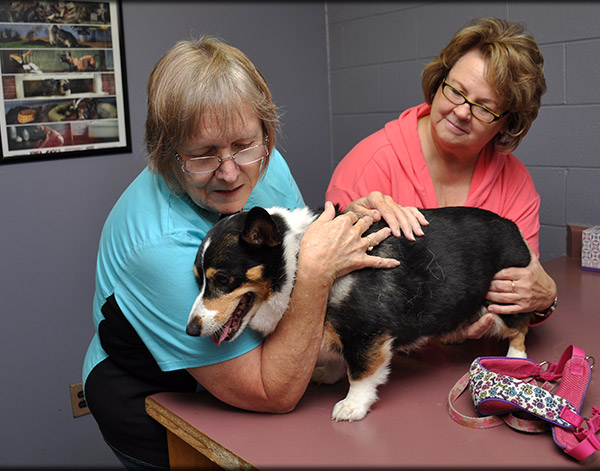 Canine Vaccinations in Chapel Hill, TN