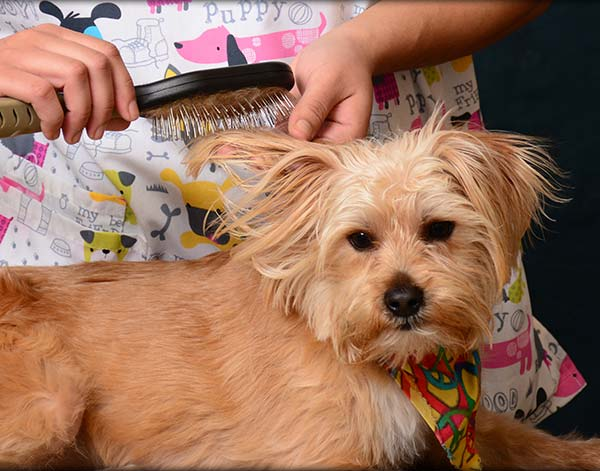 Pet Grooming Services in Chapel Hill, TN