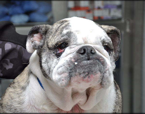 Canine Parasite Prevention Services in Chapel Hill, TN