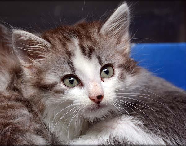 Feline Vaccinations in Chapel Hill, TN