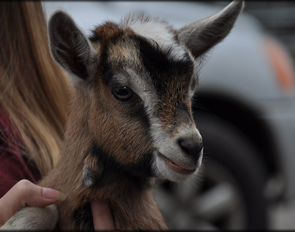 Goat and Small Ruminant Health Care in Chapel Hill, TN